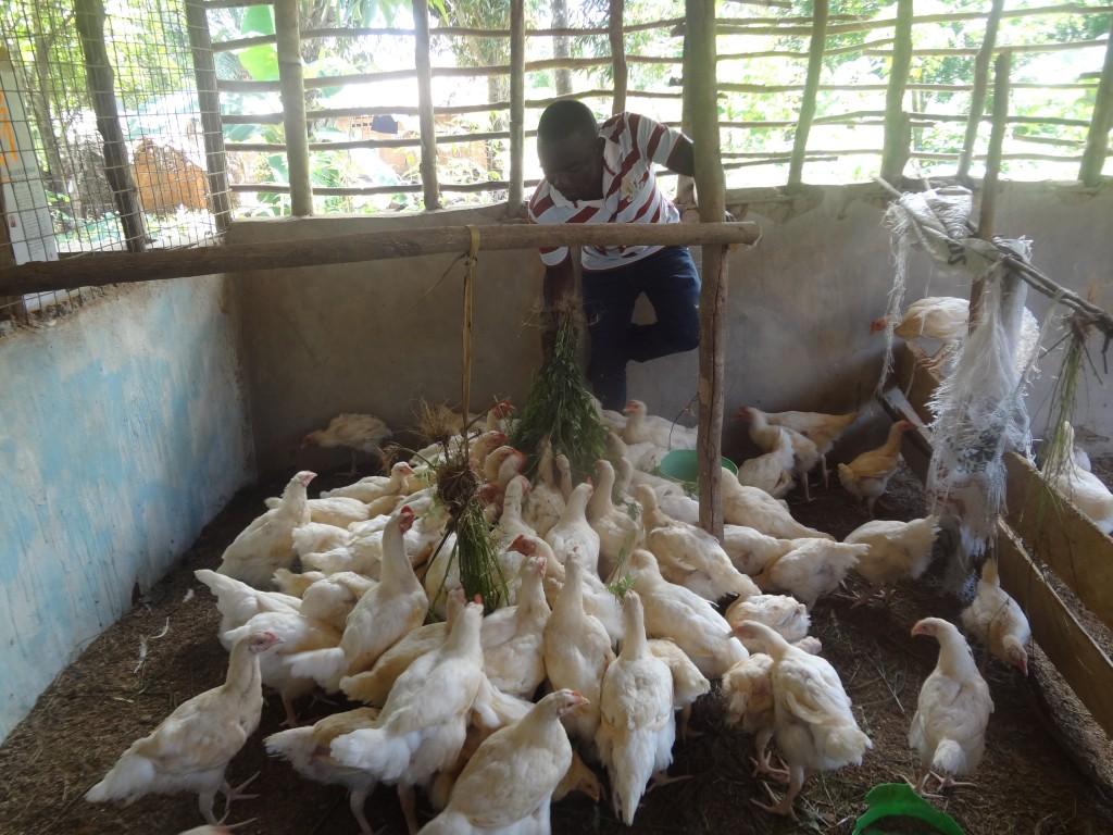 Rusodi Poultry Project – Tanzania Development Trust